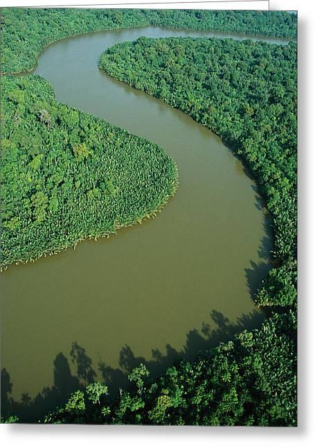 Mangrove Rhizophora Sp In Mahakam Delta Greeting Card by Cyril Ruoso