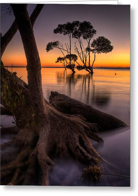 Mangroves Of Beachmere Greeting Card