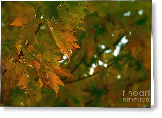 Manhattan Fall Greeting Card by Photography by Tiwago