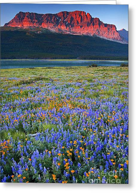 Many Glacier Morning  Greeting Card