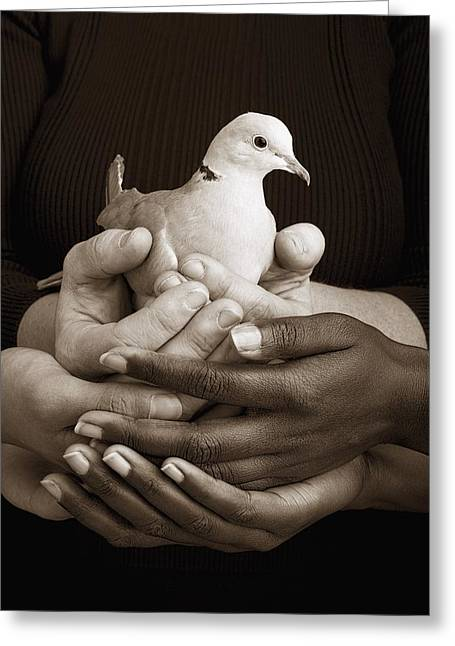 Many Hands Holding A Dove Greeting Card by Ron Nickel