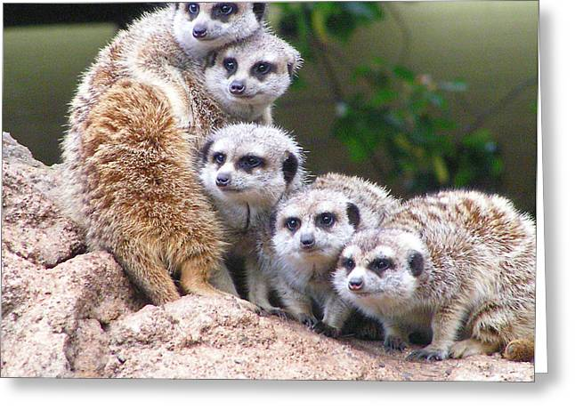 Many Meerkat Sentries Greeting Card by Margaret Saheed