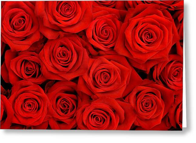 many red roses shot in shallow DOF  Greeting Card