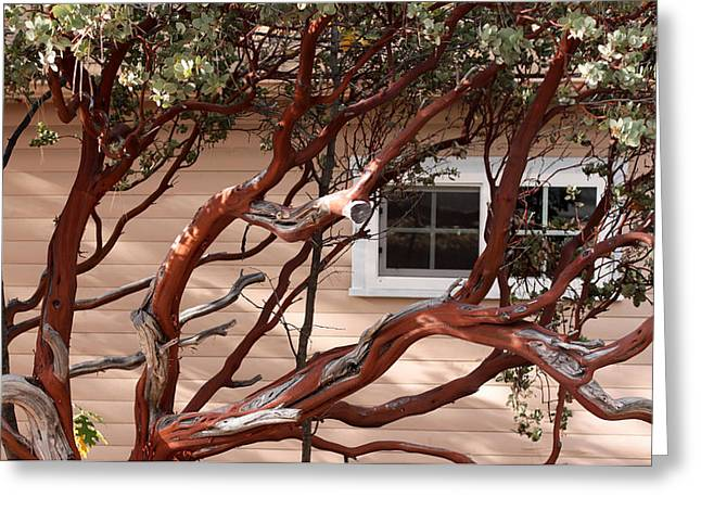 Manzanita Greeting Card by Denice Breaux