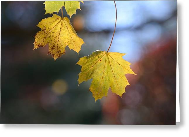 Maple 18 Greeting Card by Toshihide Takekoshi