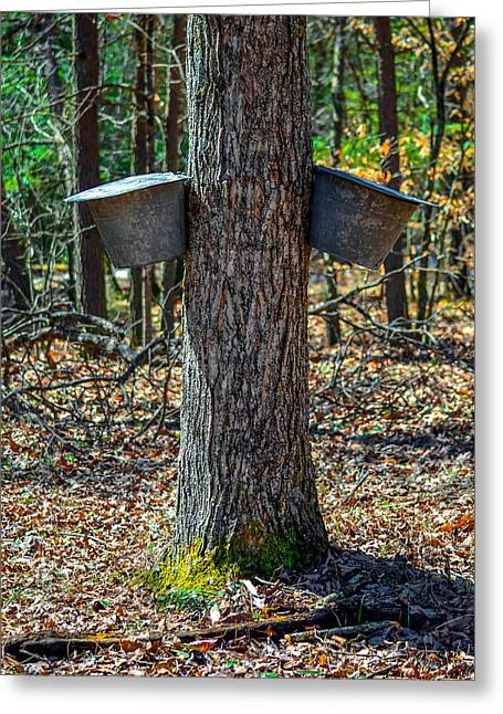 Maple Bucket Tap Greeting Card