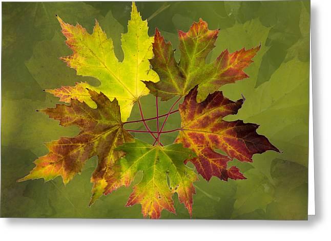 Maple Leaf Arrangement Greeting Card