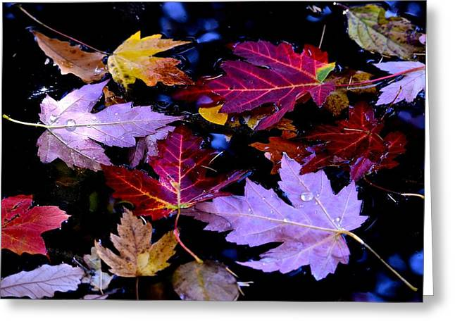 Maple Leaf Float Greeting Card