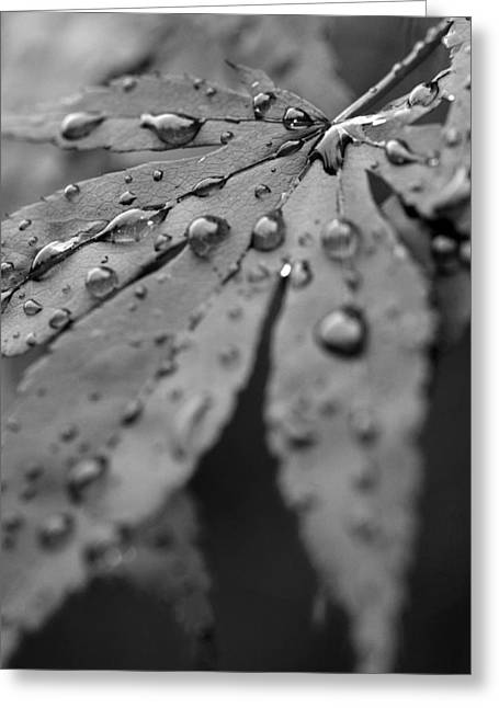 Greeting Card featuring the photograph Maple Leaf In Black And White by Bob Noble Photography
