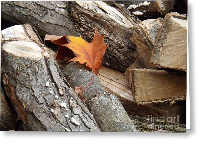 Maple Leaf In Wood Pile Greeting Card