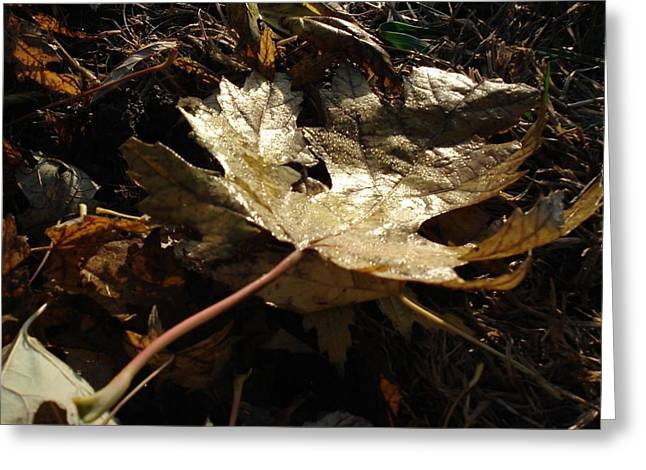 Greeting Card featuring the photograph Maple Leaf by J L Zarek