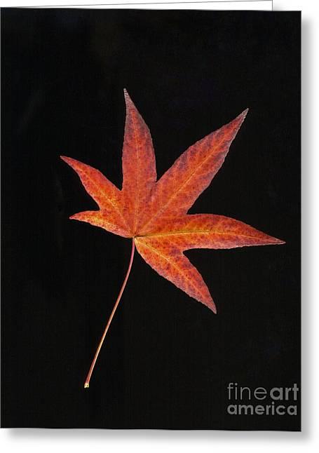 Maple Leaf On Black 2 Greeting Card
