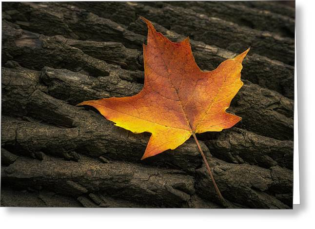 Maple Leaf Greeting Card by Scott Norris