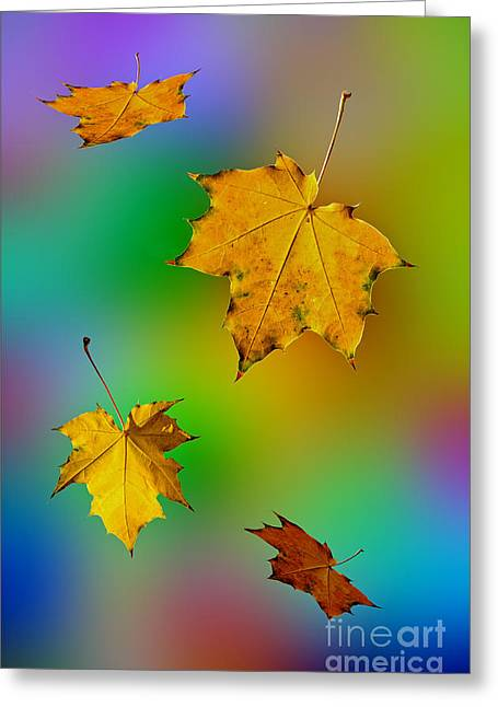 Soaring In The Air Maple Leaves. Greeting Card