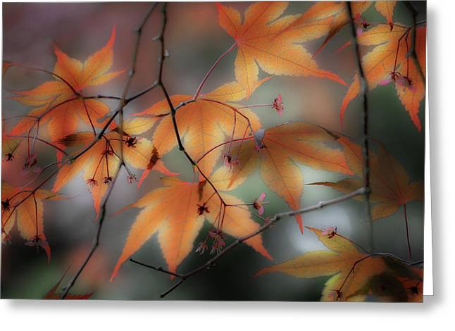 Maple Leaves 2 Greeting Card