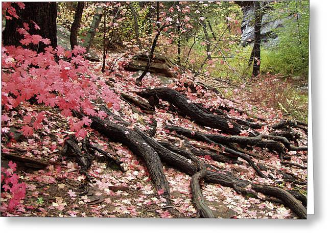 Maple Leaves And Tree Roots Greeting Card
