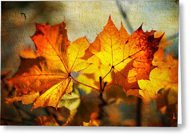 Maple Leaves At Autumn Greeting Card by Jenny Rainbow
