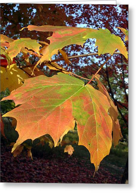 Maple Leaves Greeting Card by Michel Mata