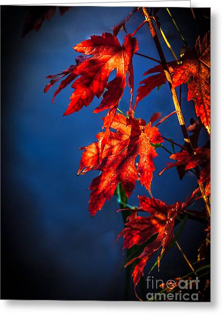 Maple Leaves Shadows Greeting Card by Robert Bales