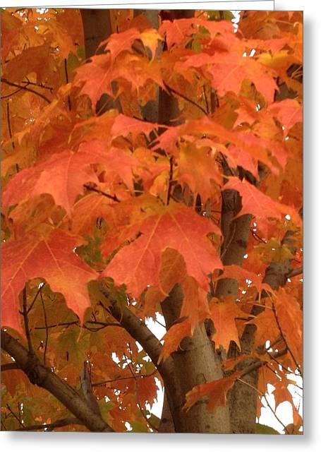 Maple Orange Greeting Card