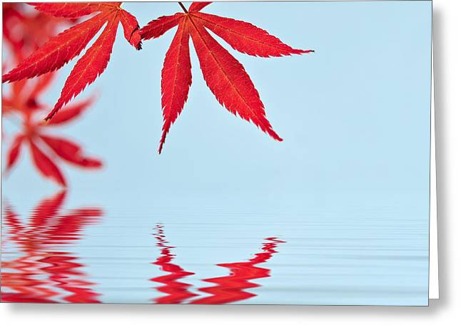 Maple Reflection Greeting Card