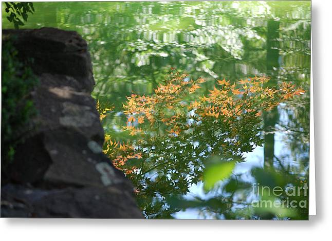 Maple Reflections Greeting Card by Sharon Elliott