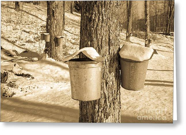 Maple Sap Buckets Greeting Card by Edward Fielding