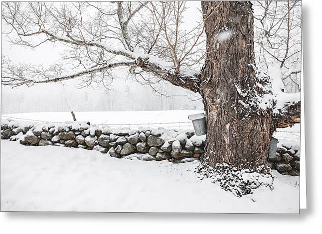 Maple Sugaring Greeting Card by Robert Clifford