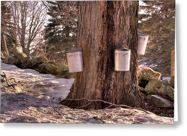 Maple Syrup Buckets Greeting Card
