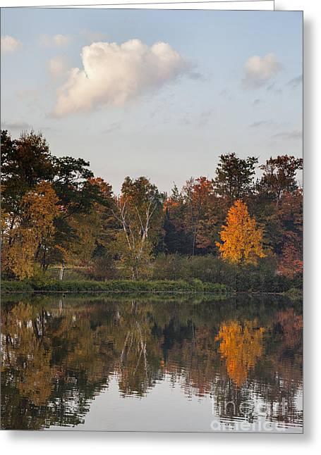 Maple Tree Reflection Greeting Card