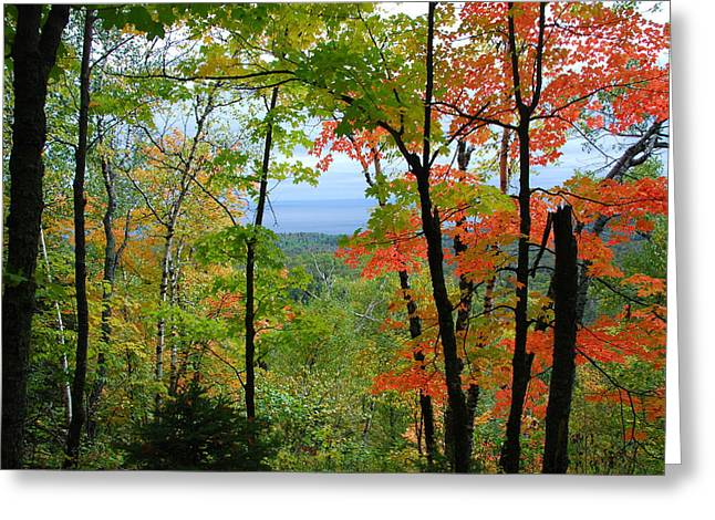 Maples Against Lake Superior - Tettegouche State Park Greeting Card