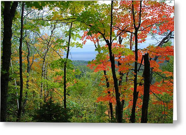 Greeting Card featuring the photograph Maples Against Lake Superior - Tettegouche State Park by Cascade Colors