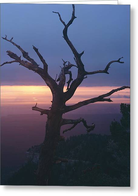 Marble View Snag-v Greeting Card