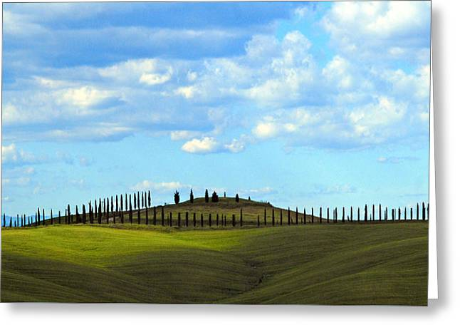 March Of The Cypress Trees Greeting Card