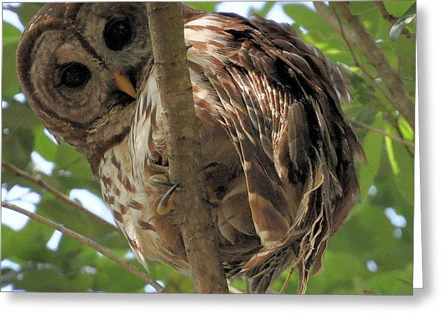 Greeting Card featuring the photograph Marcus' Backyard Hooter by AnnaJo Vahle