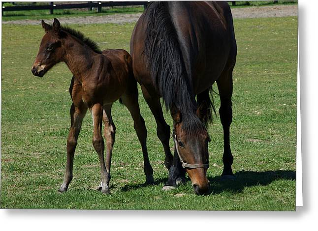 Mare And Her Foal 1 Greeting Card