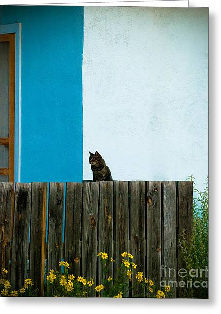 Marfa Cat Greeting Card by Sonja Quintero