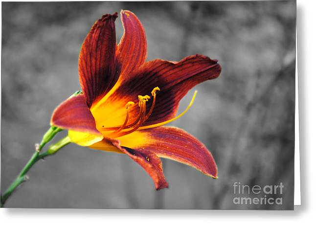 Margo's Lily Greeting Card
