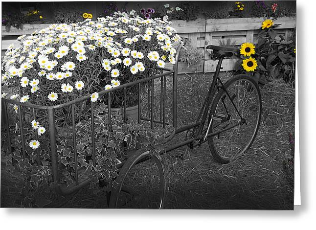 Marguerites And Bicycle Greeting Card