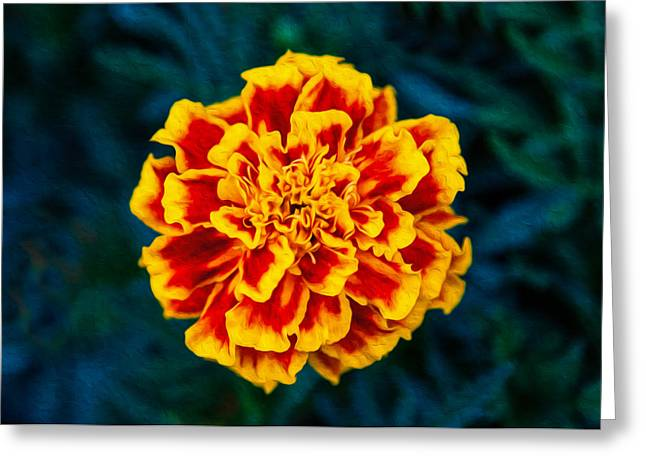 Marigolden Greeting Card by Omaste Witkowski