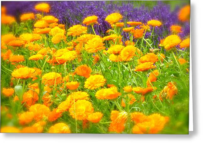 Marigolds And Lavender Greeting Card by John Colley