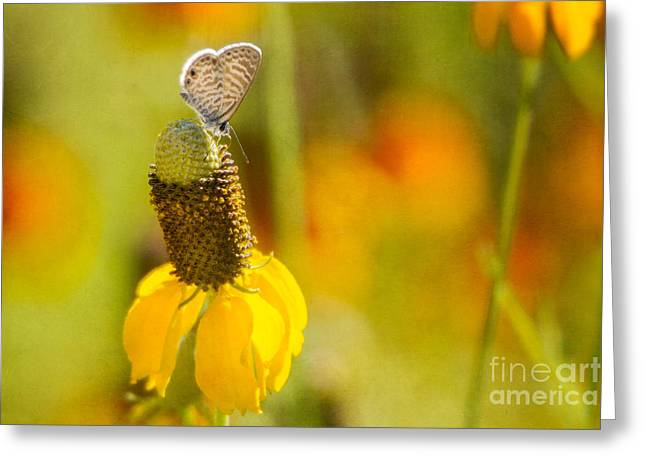 Marine Blue Butterfly Greeting Card by Marianne Jensen
