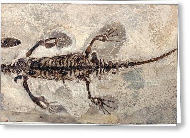 Marine Dinosaur Fossil Greeting Card