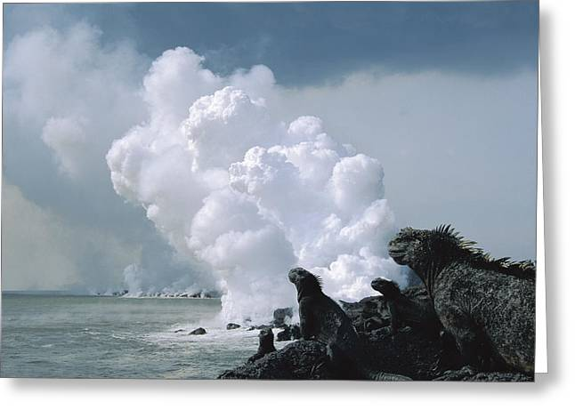 Marine Iguanas And Steam From Lava Greeting Card by Tui De Roy