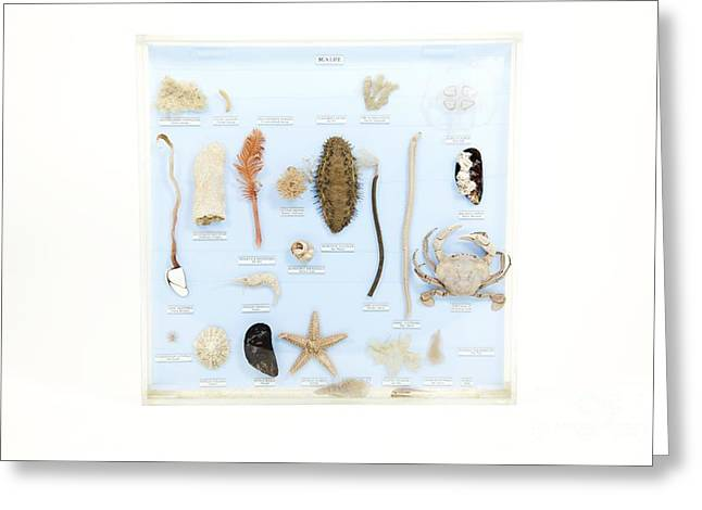 Marine Life Specimens Greeting Card by Gregory Davies / Medinet Photographics