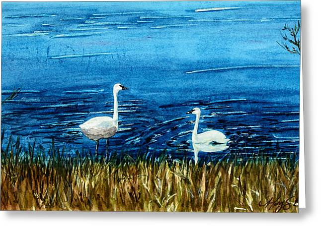 Marion Lake Swans Greeting Card