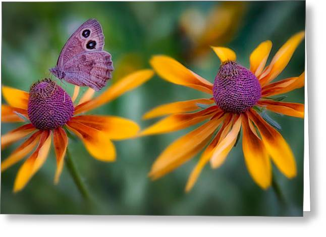 Mariposa Dos Flores Greeting Card