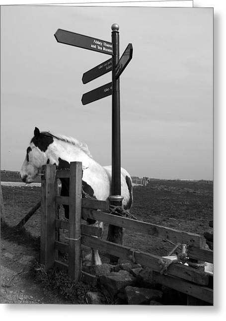Greeting Card featuring the photograph Marking The Way by Meaghan Troup