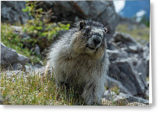 Marmot In Assiniboine Park, Canada Greeting Card by Howie Garber