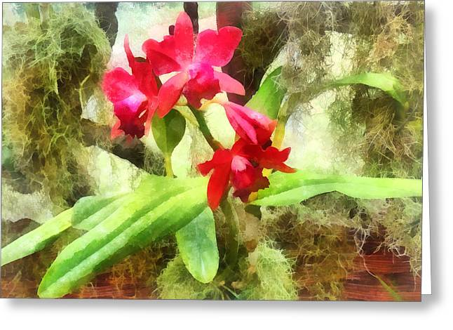 Maroon Cattleya Orchids Greeting Card by Susan Savad